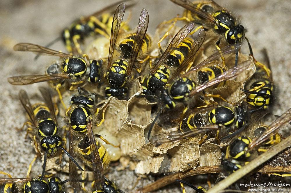 Was Bringen Wespen
