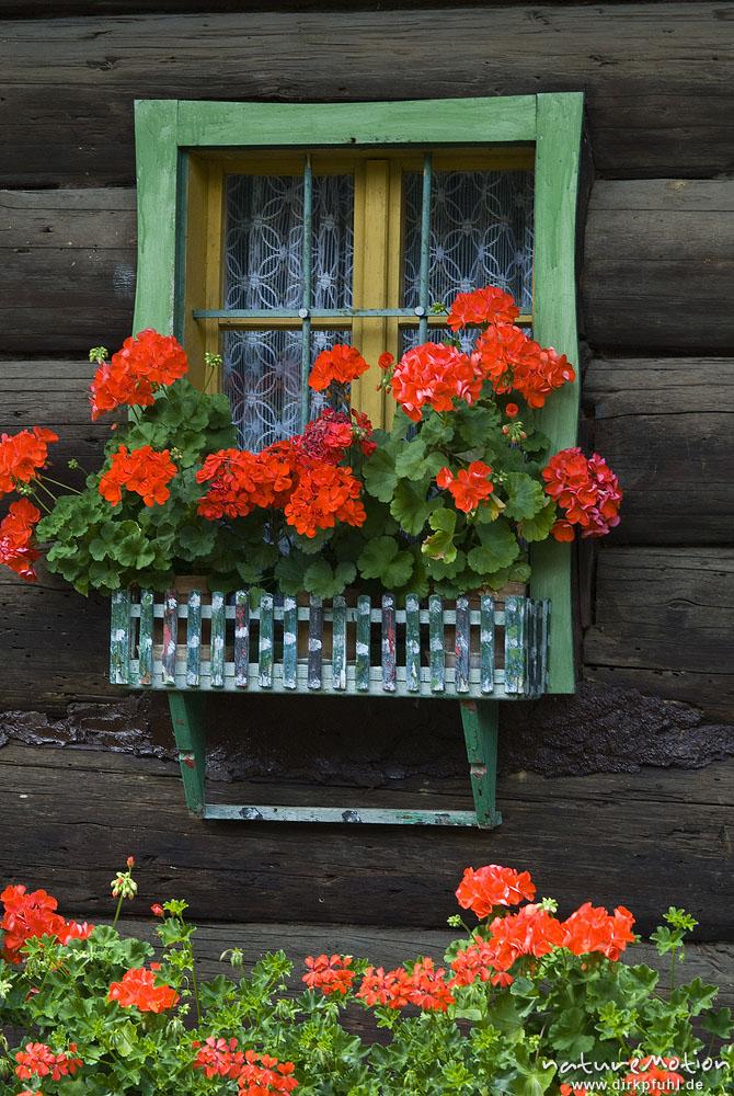 Fenster mit Blumenkasten, hölzernes Blockhaus, Geranien ...