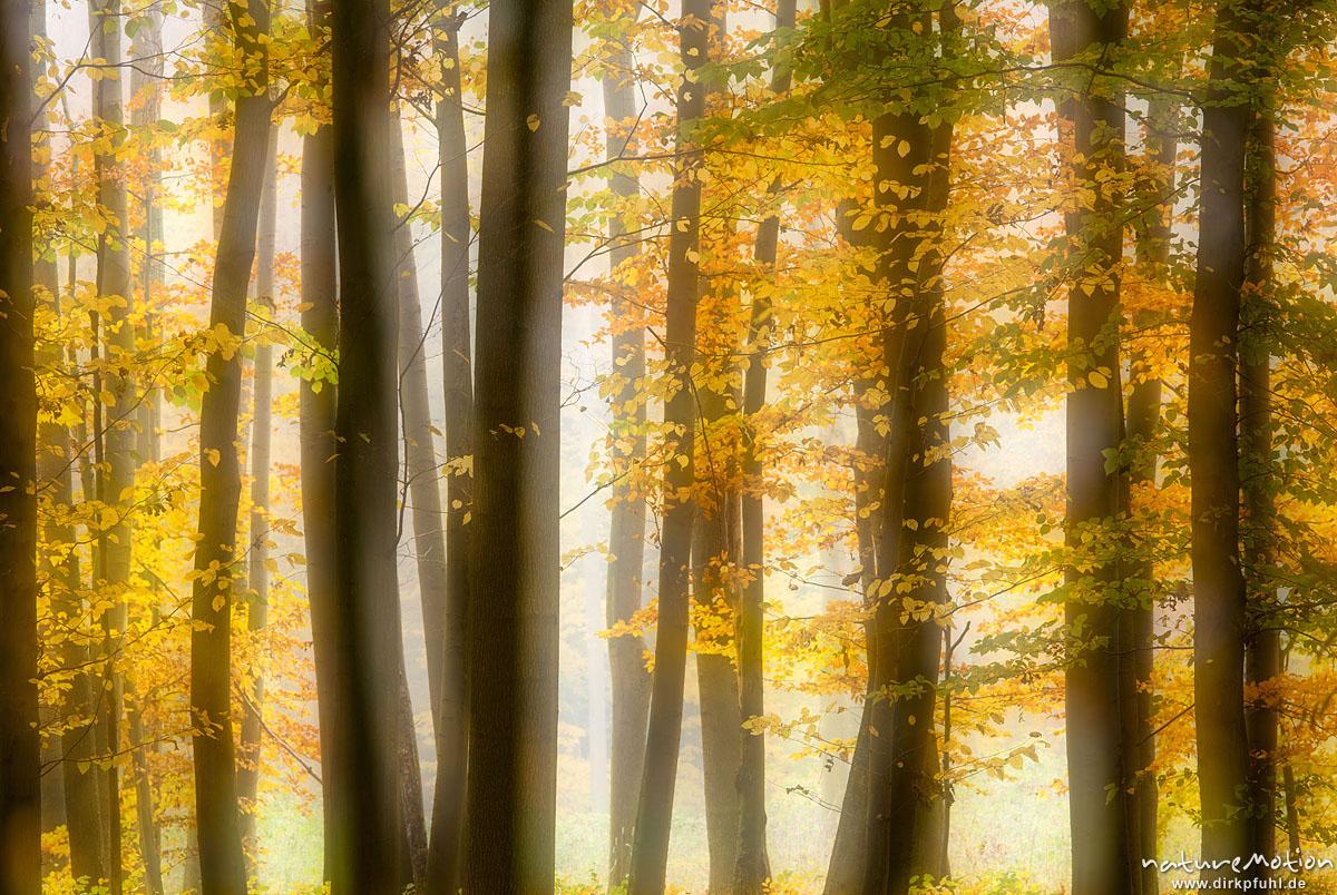 Herbstwald im Nebel, Westerberg, Göttinger Wald, Doppelbelichtung scharf/unscharf, Göttingen, Deutschland