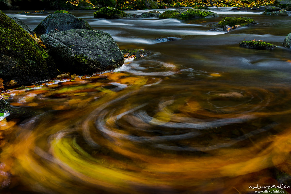 Herbstlaub kreist in einer Bucht am Bachufer, Bode, Bodetal, Harz, Deutschland
