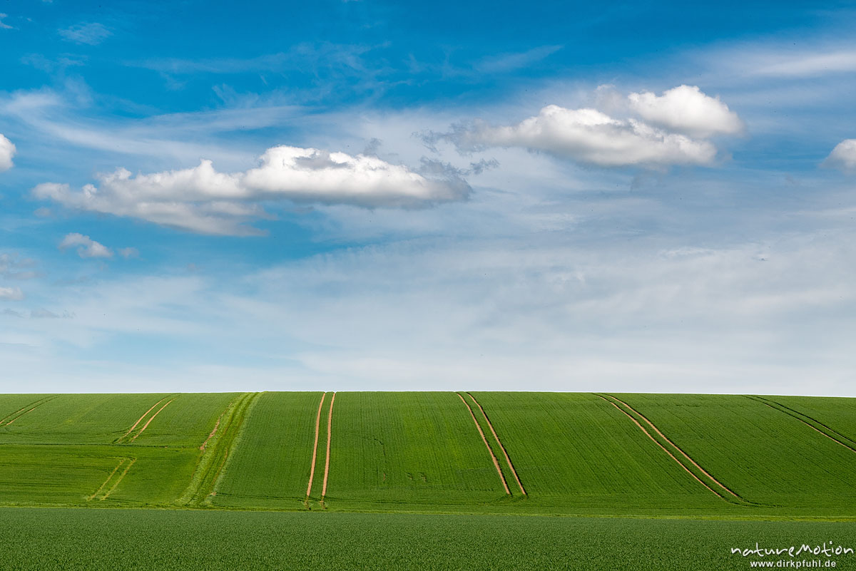 Felder mit Getreide, Fahrspuren, Wolken, Leinetal, Klein Schneen bei Göttingen, Deutschland