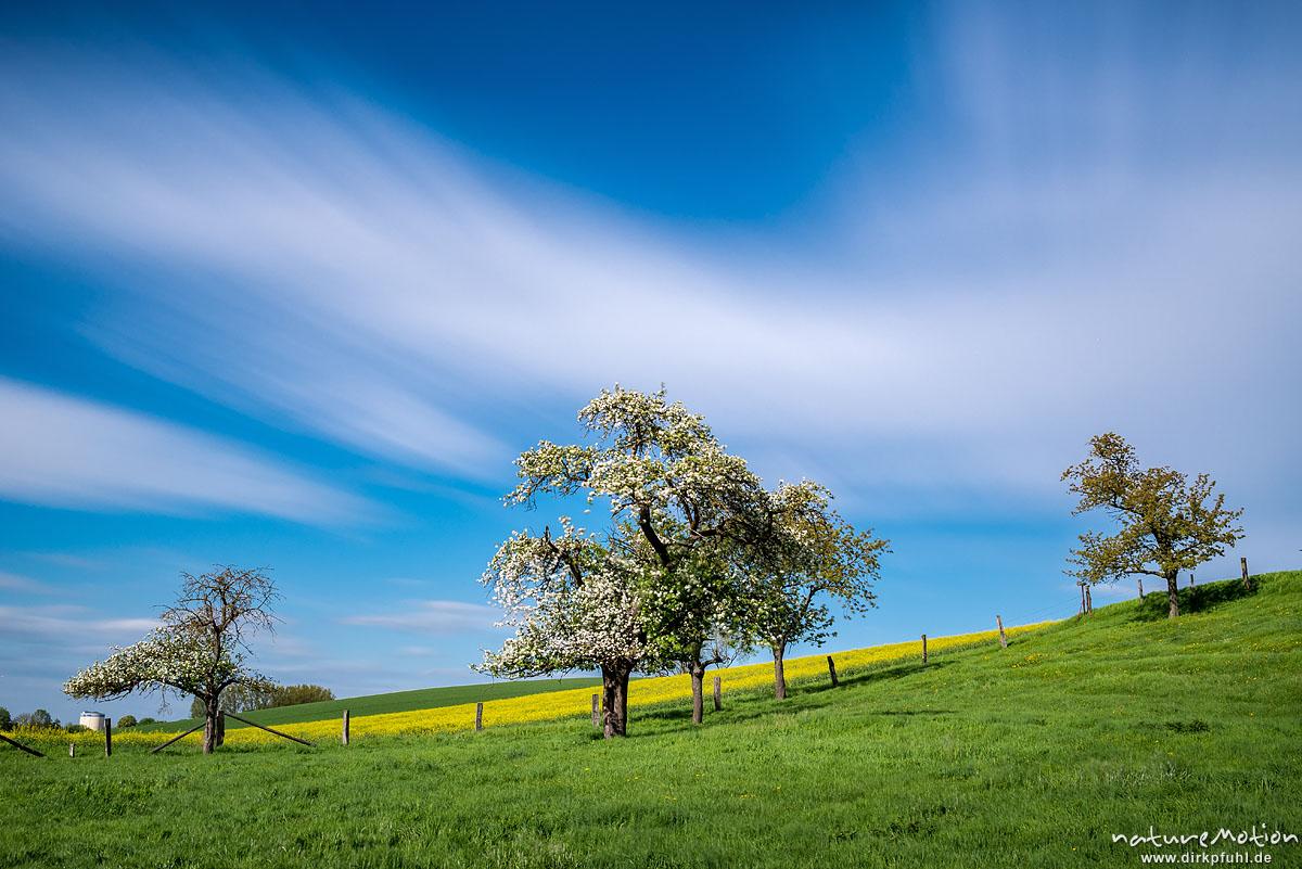 Apfel, Kulturapfel, Malus domestica, Rosengewächse (Rosaceae), blühende Apfelbäume vor Rapsfeld, schnell ziehende Wolken, Klein Schneen bei Göttingen, Deutschland