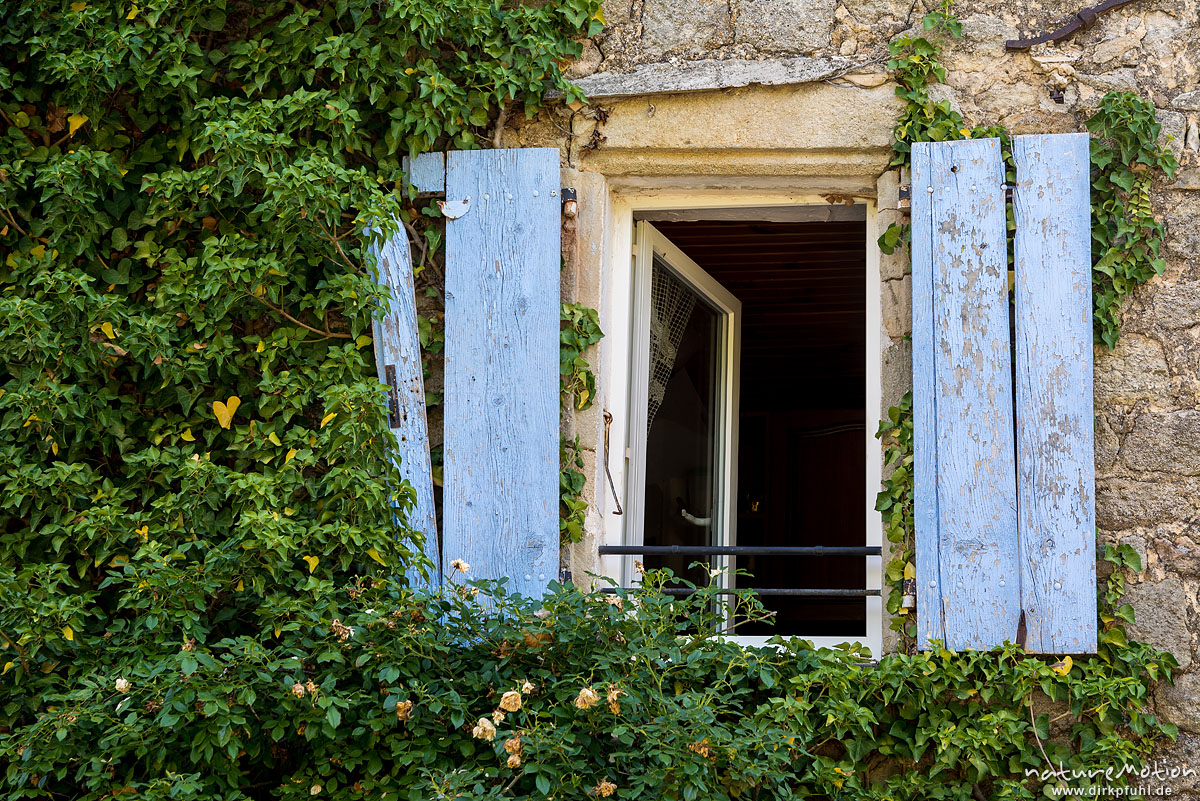 Fenster mit blauen Fensterläden, Fassade mit Laub bewachsen, Chassiers, Frankreich