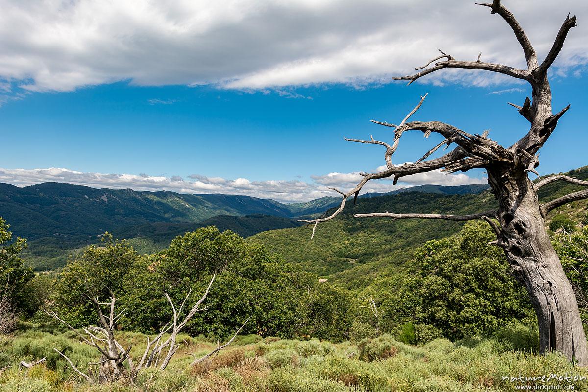 bewaldete Höhenzüge im Tanargue-Gebirge, abgestorbener Baum, Valgorge, Largentiére, Frankreich