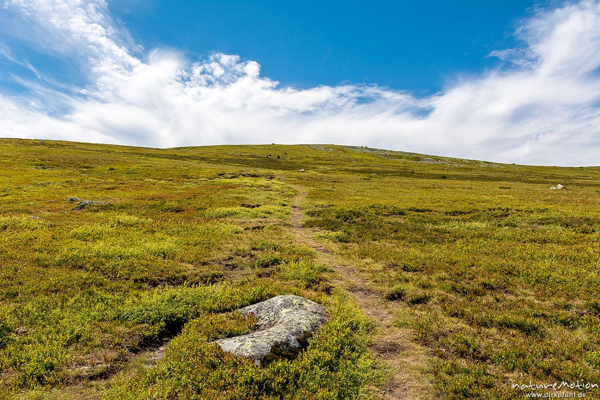 Wanderweg, Heidelandschaft an den Hängen des Mont Lozère, Florac, Frankreich