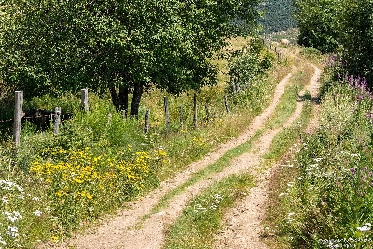 Feldweg, Zaun, Viehweiden, Tal des Le Rieubellet zwischen Finiels und Le Pont-de-Montvert, Florac, Frankreich