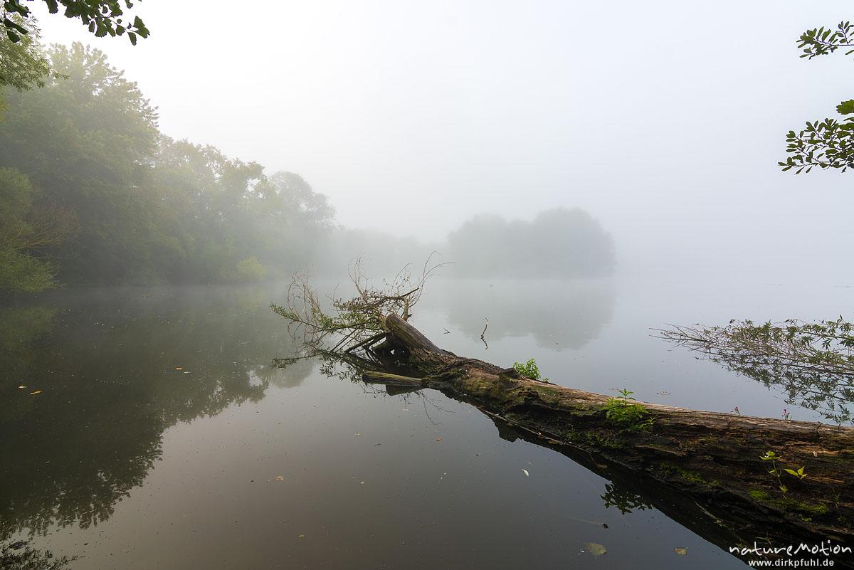 abgebrochener Stamm einer Weide ragt ins Wasser eines Sees, Morgennebel, Kiessee, Göttingen, Deutschland