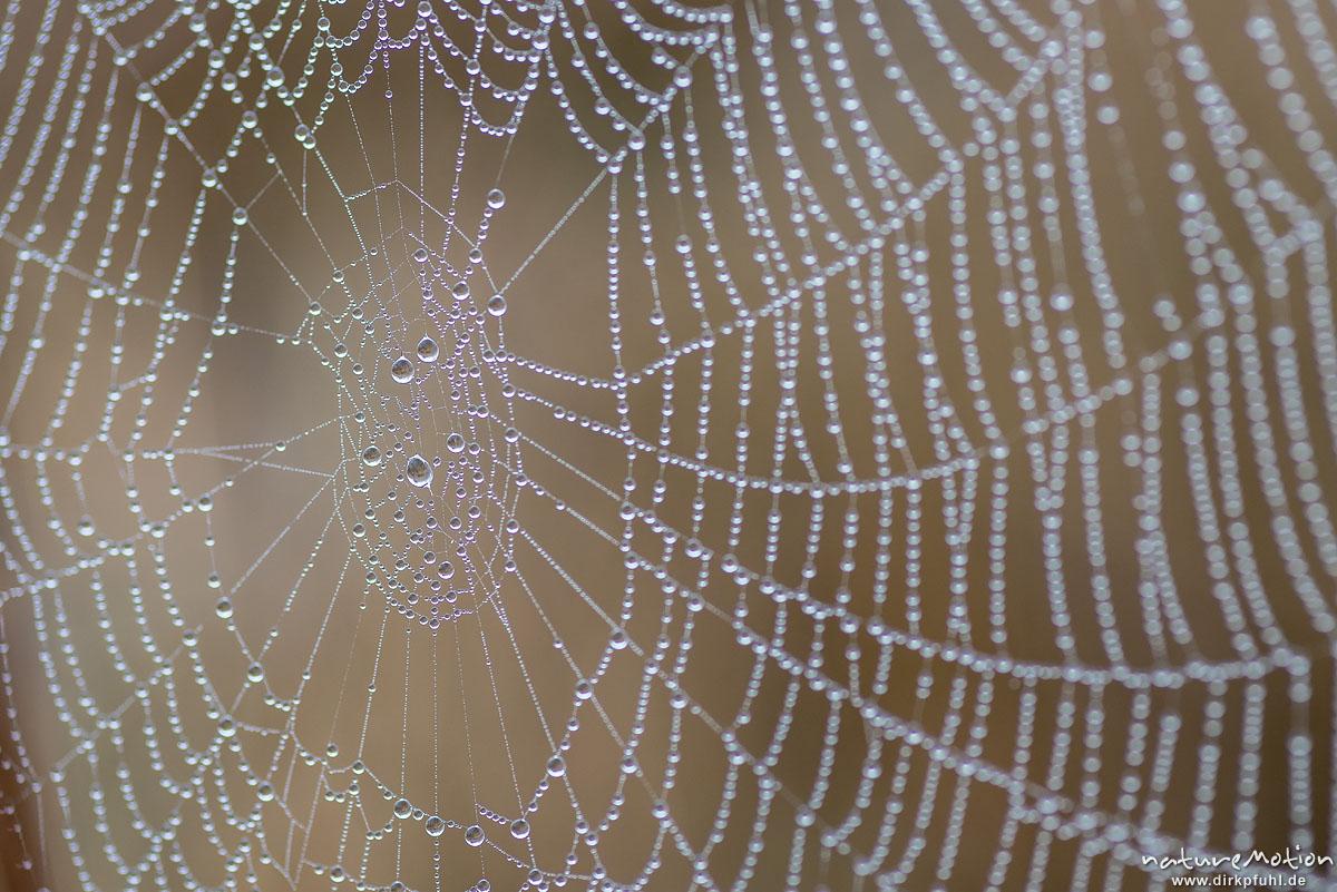 Spinnennetz mit Tautropfen, Kiessee, Göttingen, Deutschland