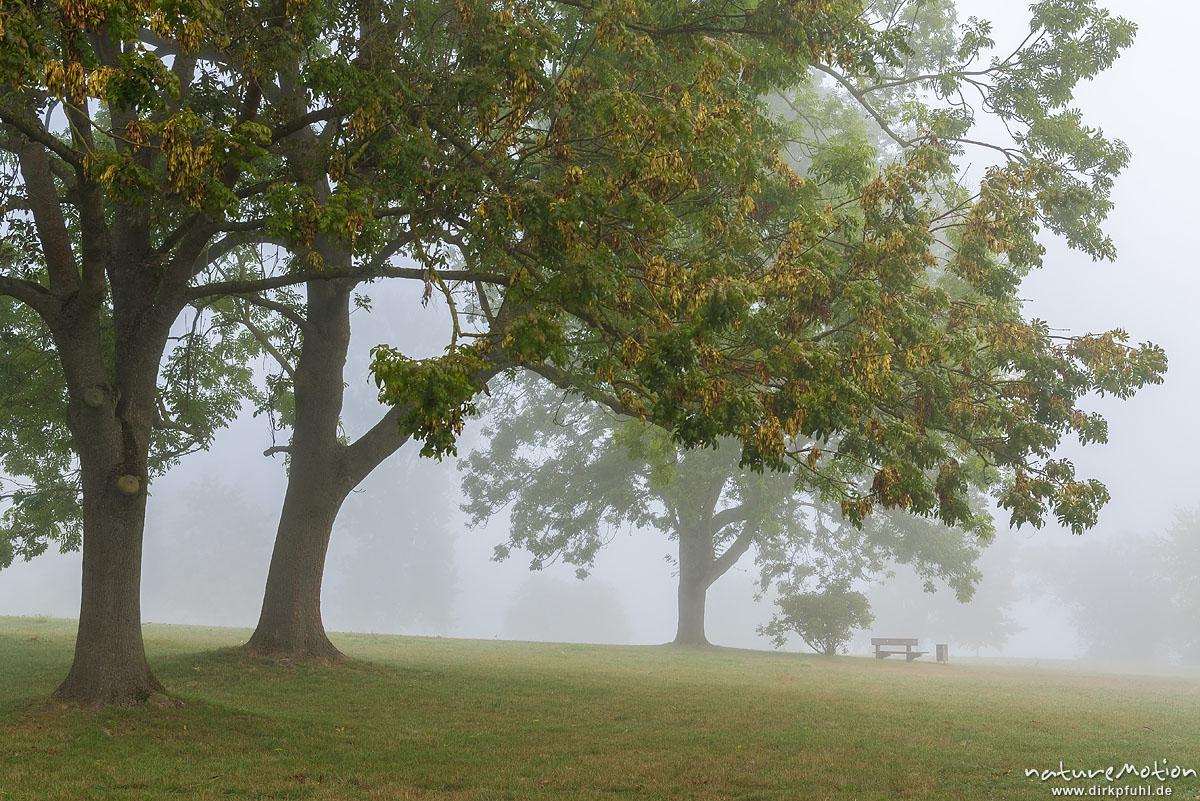 Park im Nebel, Bäume und Parkbank, Kiessee, Göttingen, Deutschland