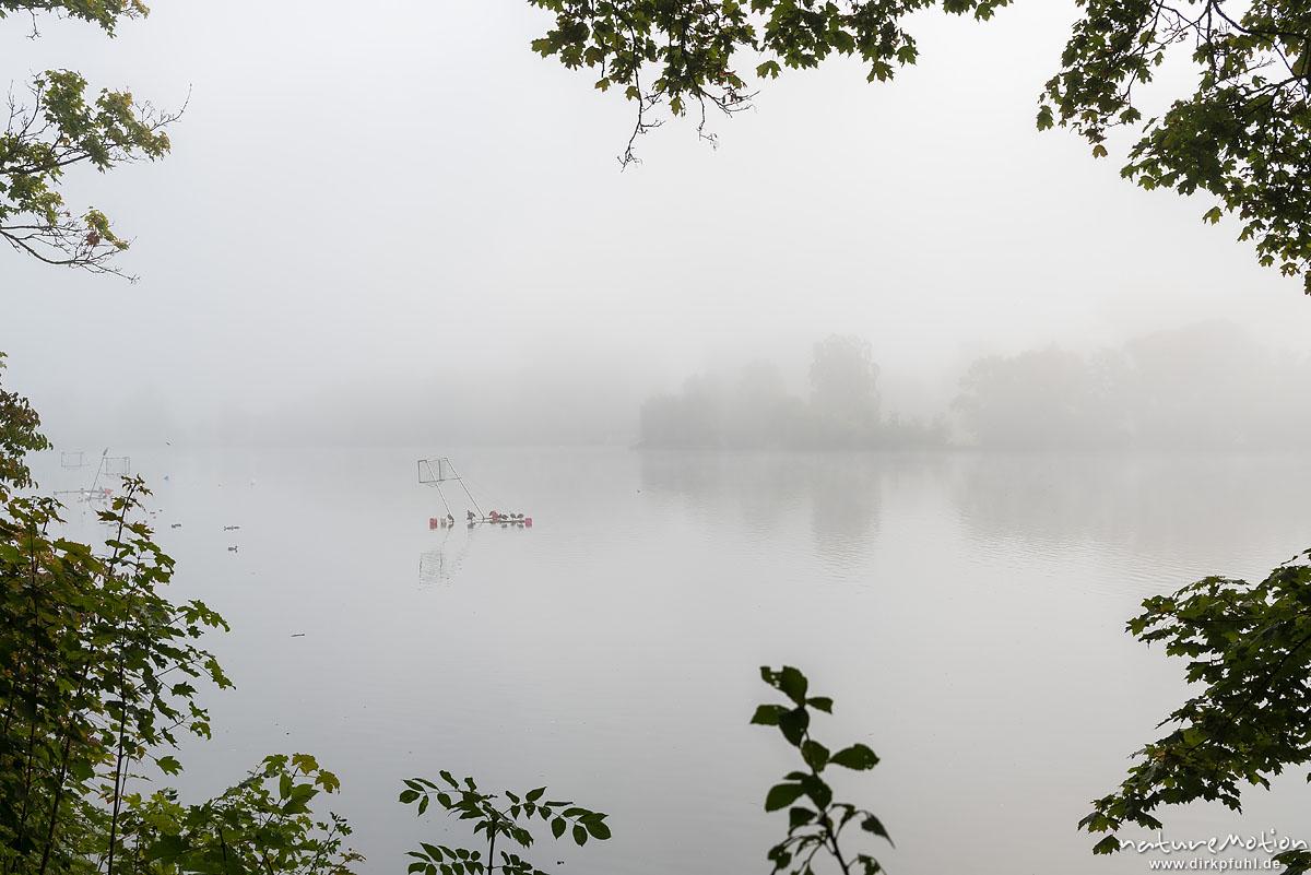 Nebelstimmung am See, Nilgans, Alopochen aegyptiacus, Entenvögel (Anatidae), Tiere sitzen auf Metallgestänge einer Kanupolo-Anlage, Kiessee, Göttingen, Deutschland