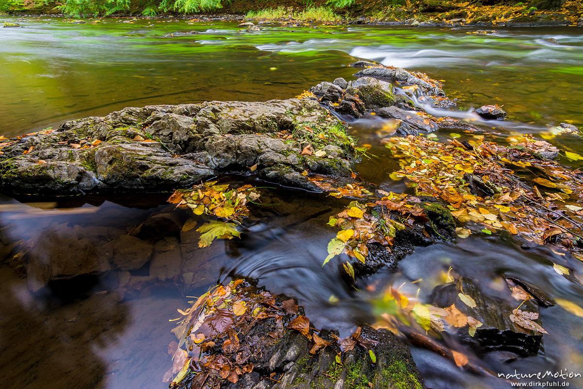 fließender Gebirgsbach der Bode zwischen Felsen, beginnende Herbstfärbung, Bodetal, Deutschland