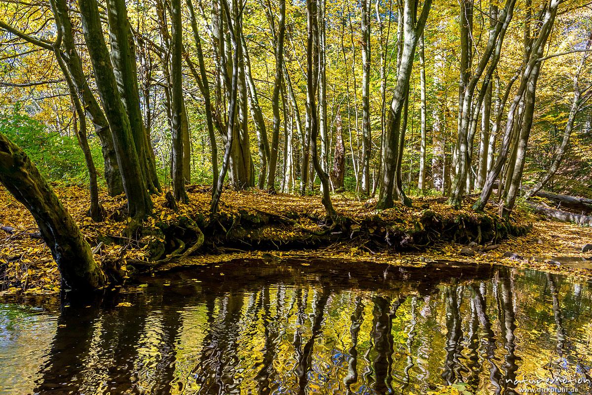 Mittelgebirgsbach mit Herbstlaub, Spiegelungen der Bäume, Niemetal, Löwenhagen, Deutschland
