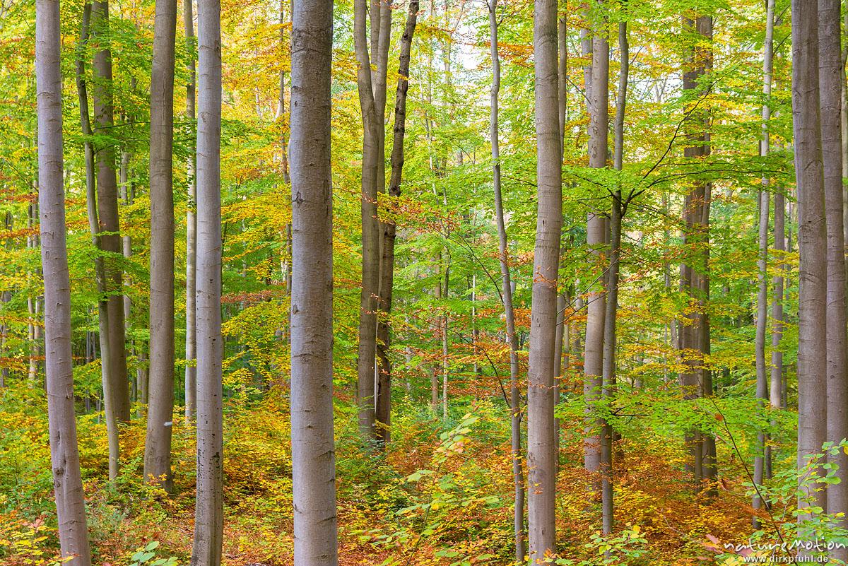 Herbstwald, Asbach-Sickenberg, Deutschland