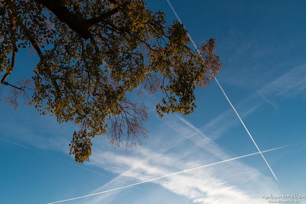 Kondensstreifen am Abendhimmel, Linde mit Herbstlaub, Leineauen, Göttingen, Deutschland