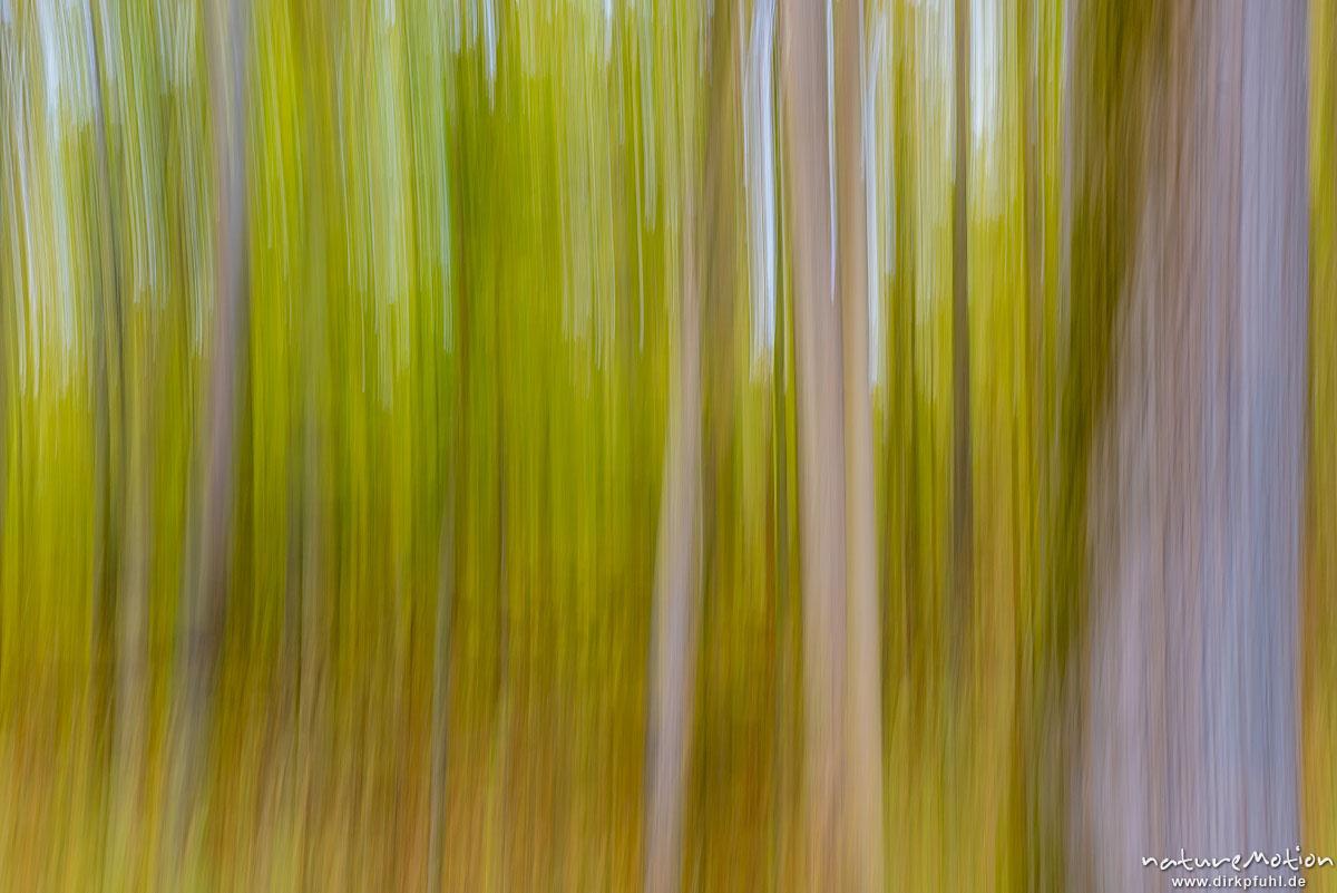 Herbstwald, gewischt, Göttinger Wald, Göttingen, Deutschland