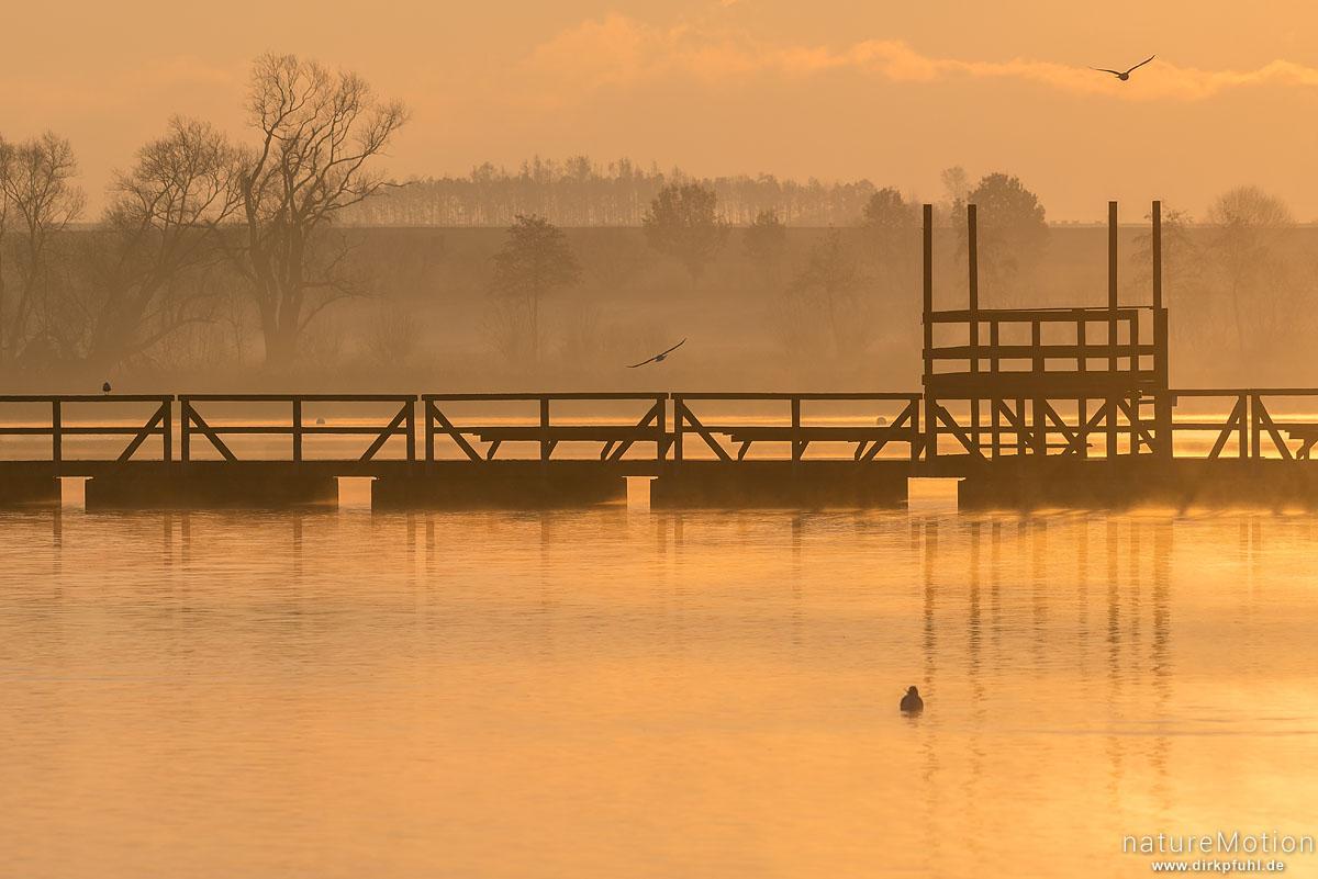 Sonnenaufgang, Nebel, Seeburger See, Seeburger See, Deutschland