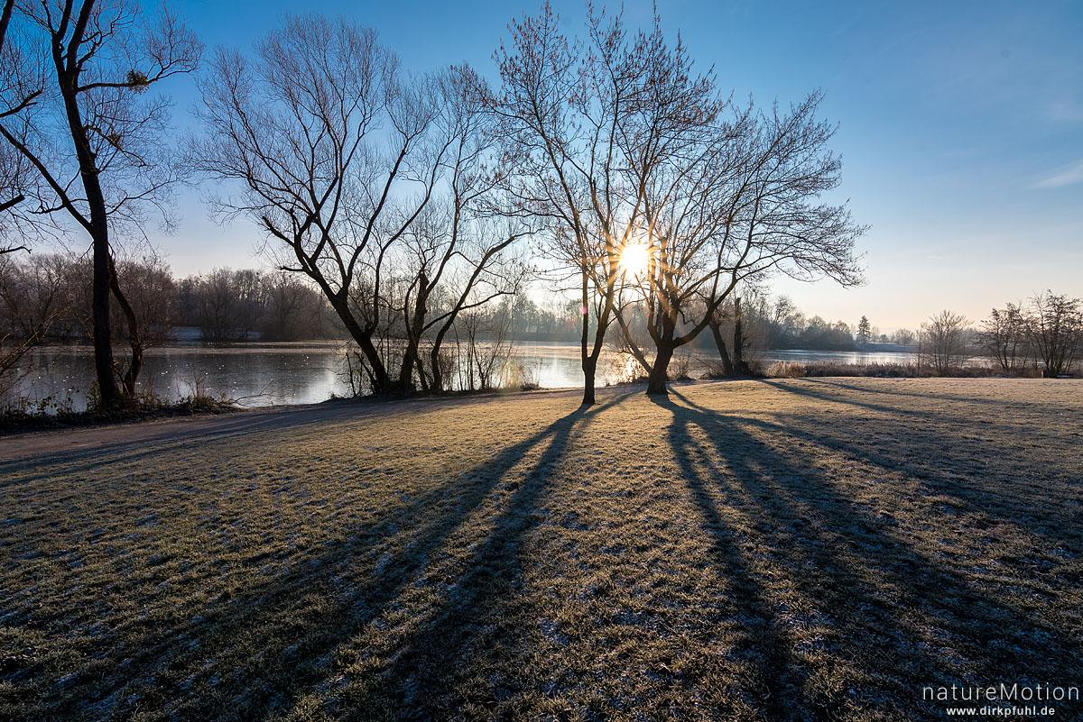 Bäume am Seeufer, Sonnenaufgang, Kiessee, Göttingen, Deutschland