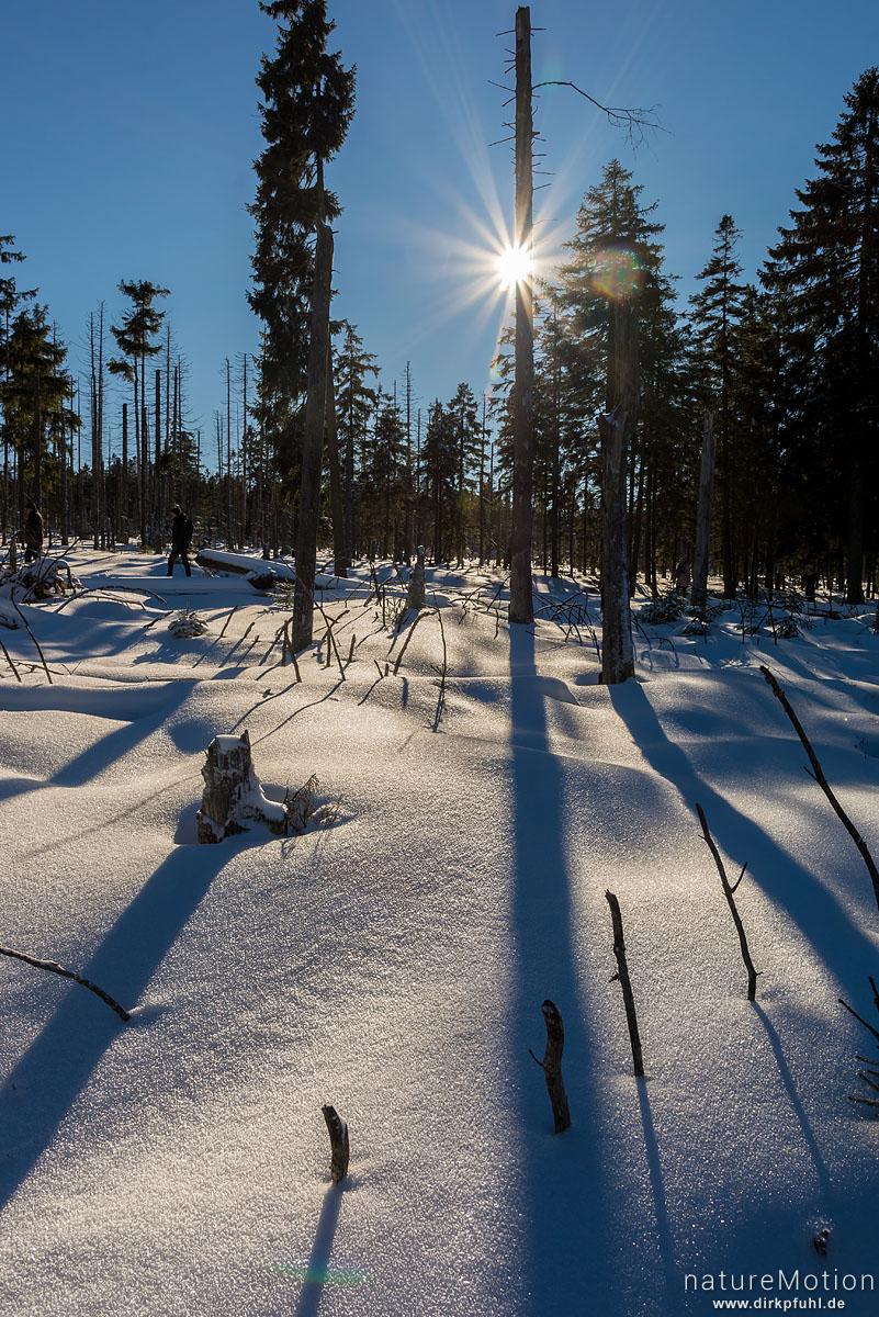 Sonne strahlt durch abgestorbene Fichten, Schnee, Schatten, Torfhaus, Deutschland