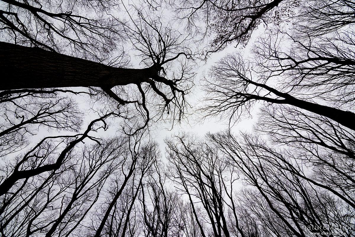 kahle Baumkronen gegen den Himmel, Westerberg, Göttingen, Deutschland
