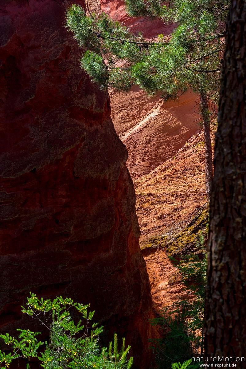 Ockersteinbruch, Felsen und Sand in verschiedenen Rot, Braun und Gelbtönen, dazwischen grüne Nadelbäume, Roussillon - Provence, Frankreich
