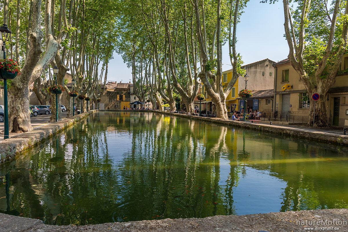 Wasserbecken gesäumt von großen Platanen, Dorfplatz, Cucuron - Provence, Frankreich