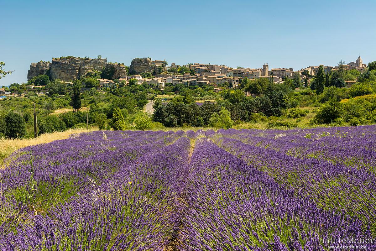 Echter Lavendel, Lavandula angustifolia, Lippenblütler (Lamiaceae), Lavendelfeld vor dem Ort Saignon, Saignon - Provence, Frankreich
