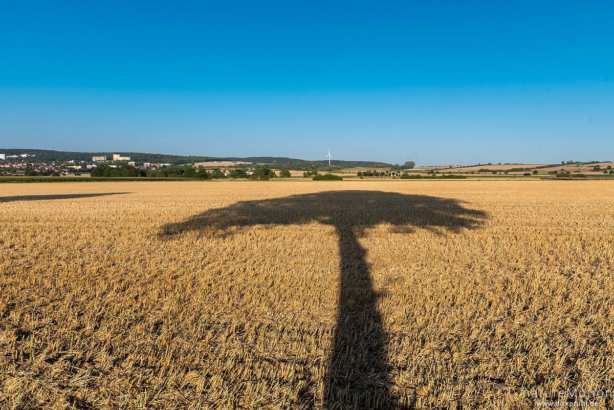 Schatten eines Baumes auf abgeerntetem Feld, Leinetal, Göttingen, Deutschland