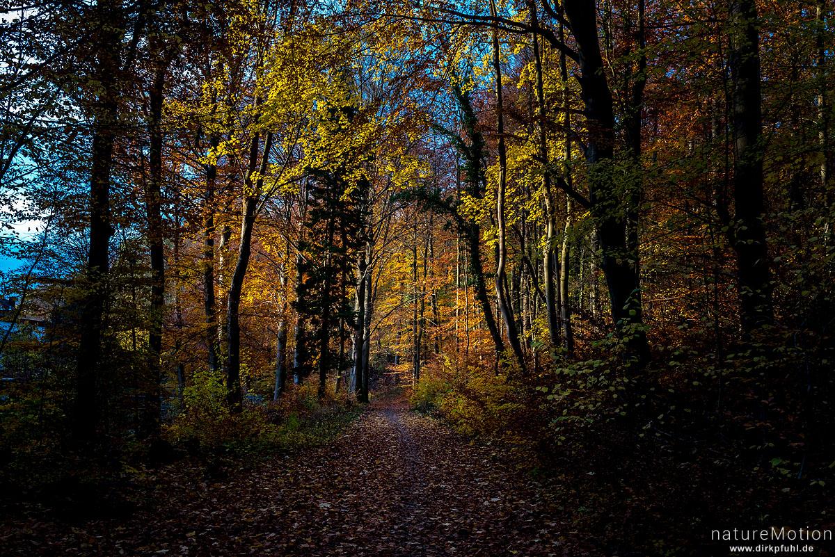 Weg durch den Herbstwald, Göttinger Wald, Göttingen, Deutschland