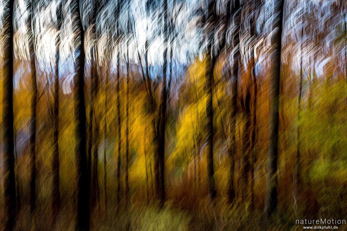 Herbstwald, verwischt, Göttinger Wald, Göttingen, Deutschland