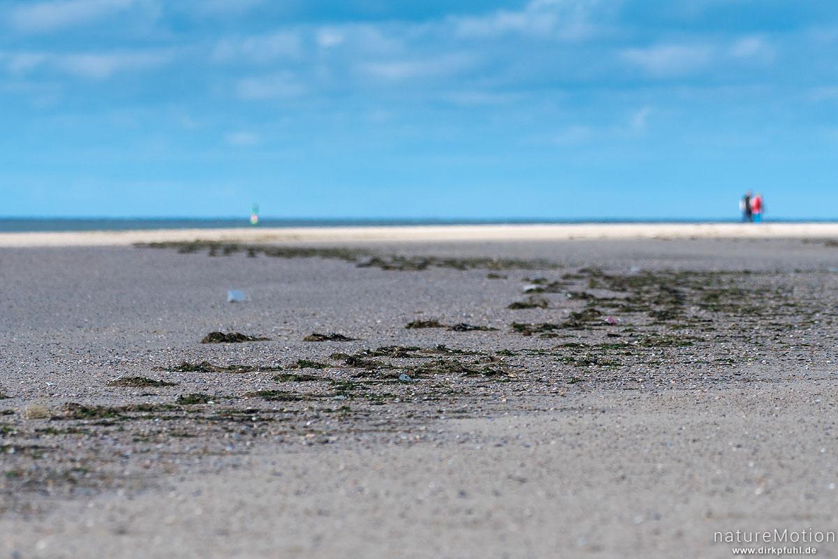 Flutmarke, angespülte Algen am Strand, Spaziergänger, Süderlog, Spiekeroog, Deutschland