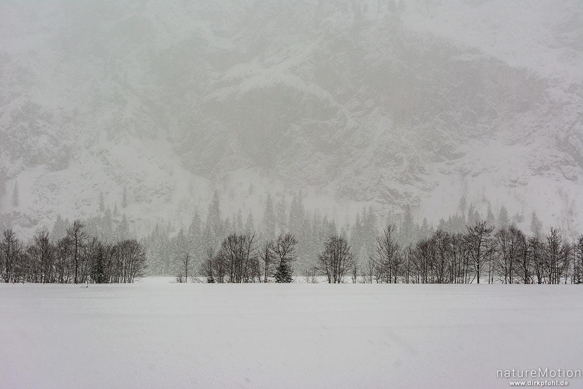 kahle Bäume vor Bergkulisse, Schneetreiben, Oytal-Haus, Oberstdorf, Deutschland