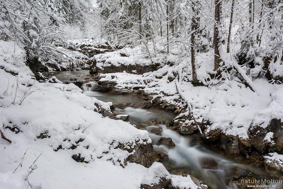 Bergbach im Winterwald, Oybach-Tal, Oberstdorf, Deutschland