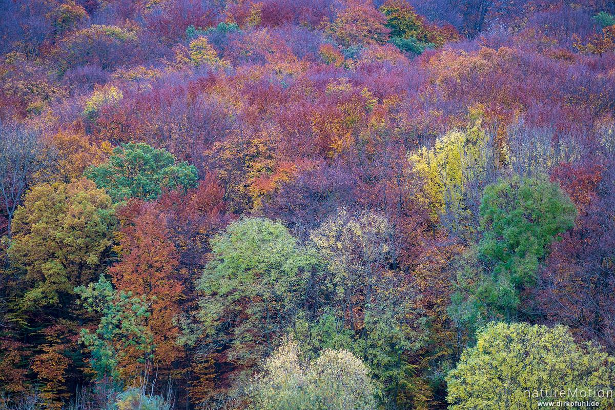 Herbstwald, farbiges Laub, Westerberg, Göttingen, Deutschland