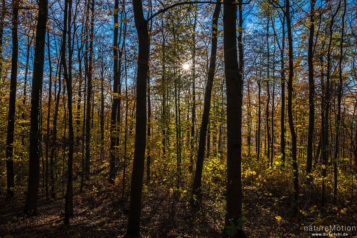 Herbstwald, Sonne, Kehr, Göttinger Wald, Göttingen, Deutschland