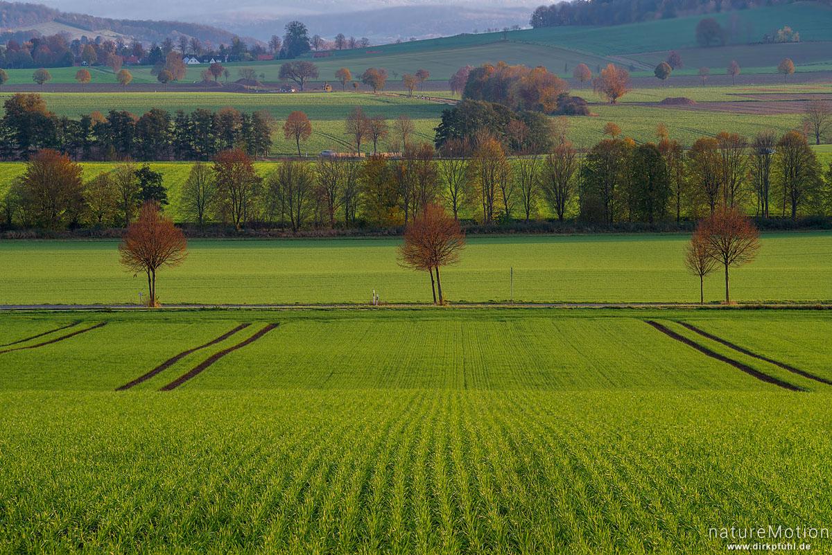 Felder mit Wintergetreide, Baumreihen, Warteberg mit Blick auf Obernjesa, Göttingen, Deutschland