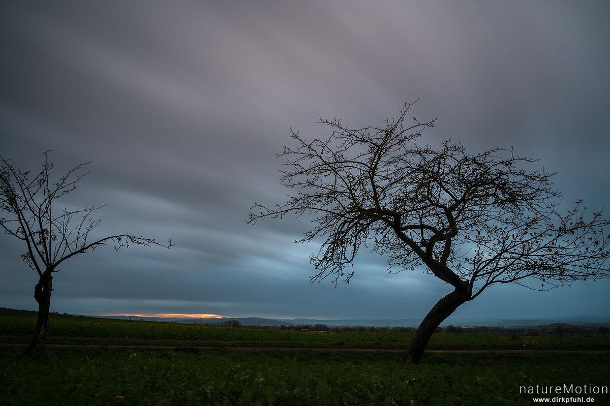 Apfelbaum, Sonnenuntergang, Herbsthimmel, Feldmark südlich Geismar, Göttingen, Deutschland