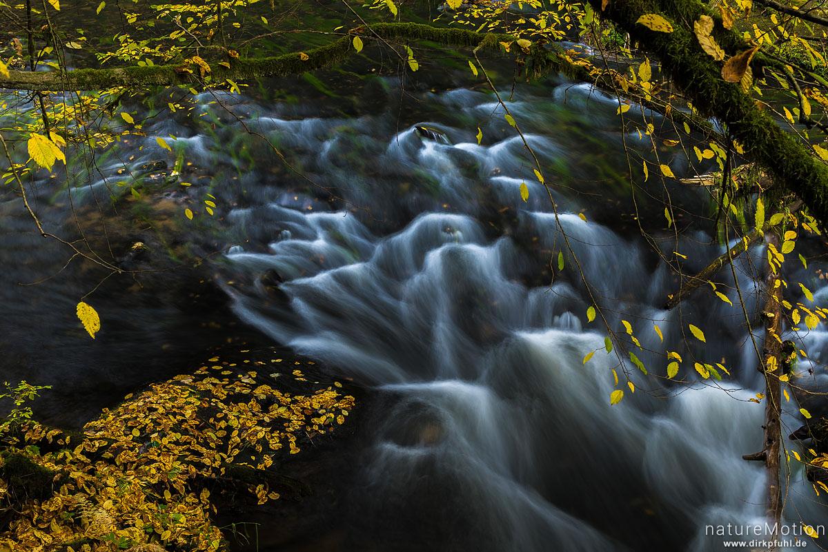 Gebirgsbach, Herbstlaub, Wilde Klamm, Kamnitzbach, Hrensko, Tschechien