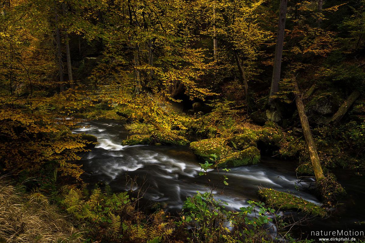 Gebirgsbach, Herbstlaub, Edmundsklamm, Kamnitzbach, Hrensko, Tschechien