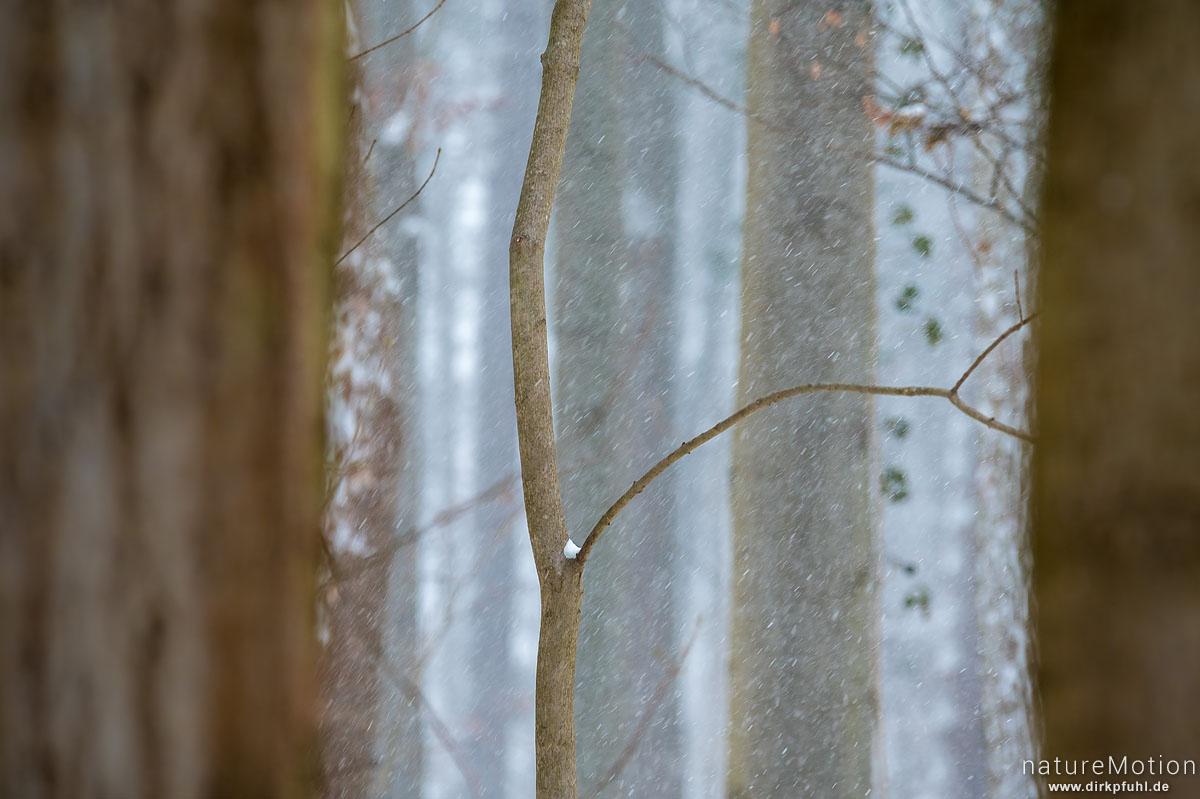 schneebedeckte Bäume, Schneetreiben, Göttinger Wald, Göttingen, Deutschland
