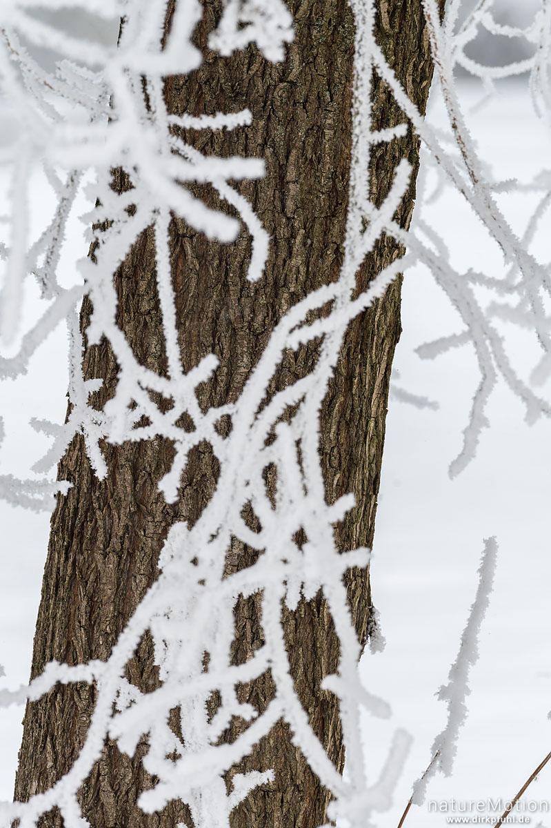 Baumstamm, vereiste Zweige, Raureif, Kiessee, Göttingen, Deutschland