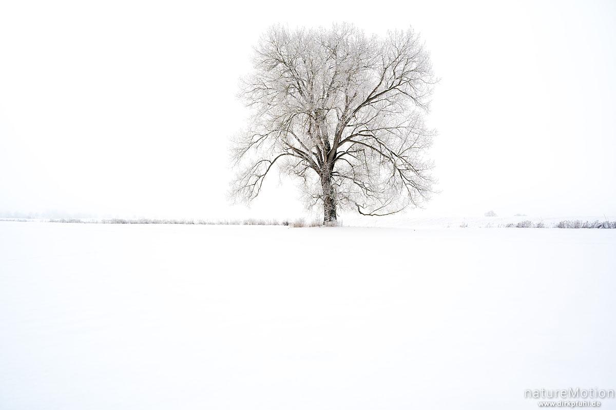 einzeln stehender Baum in weißer Winterlandschaft, Göttingen, Deutschland