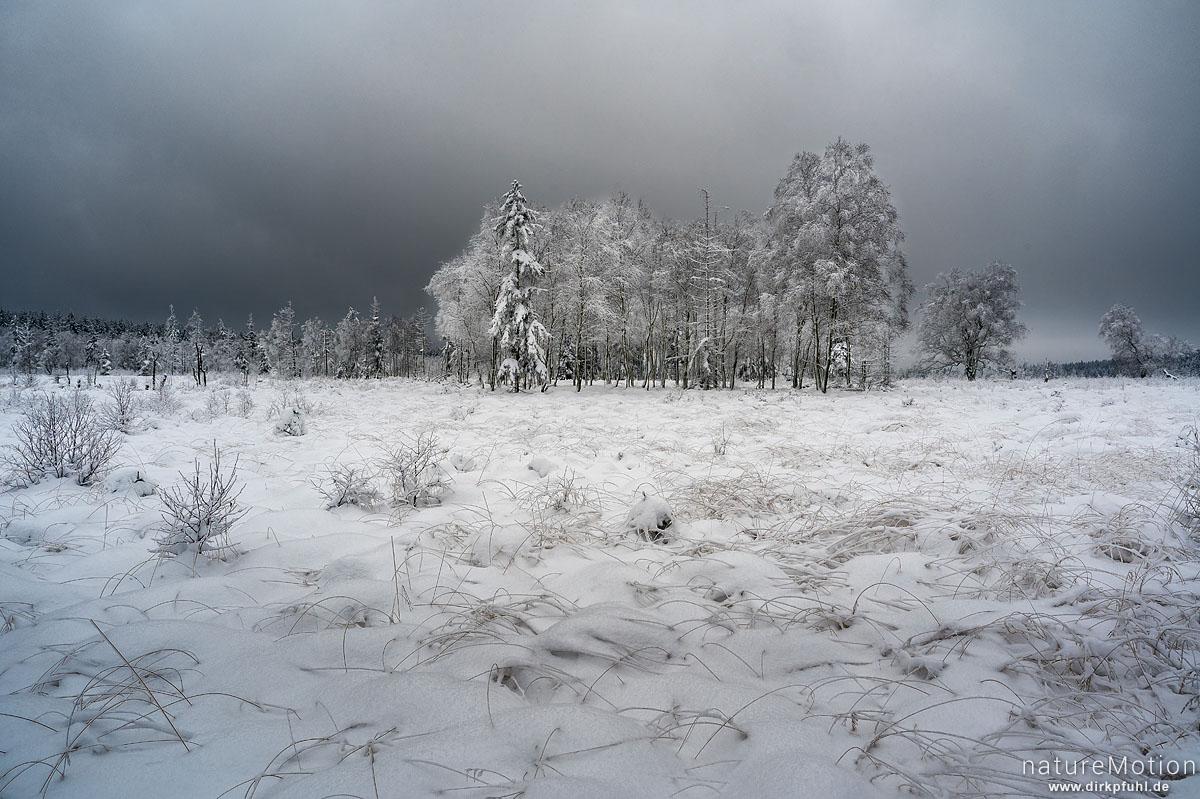 schneebedecktes Hochmoor, Bäume, Gras, Wolken, Mecklenbruch, Silberborn, Solling, Deutschland