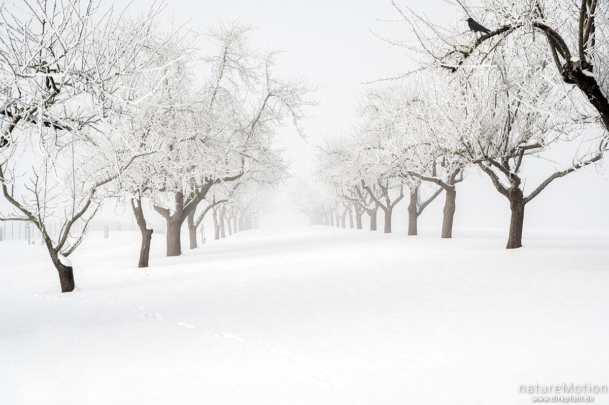 Obstbaumallee, schneebedeckt, Wasserwerk, Göttingen, Deutschland