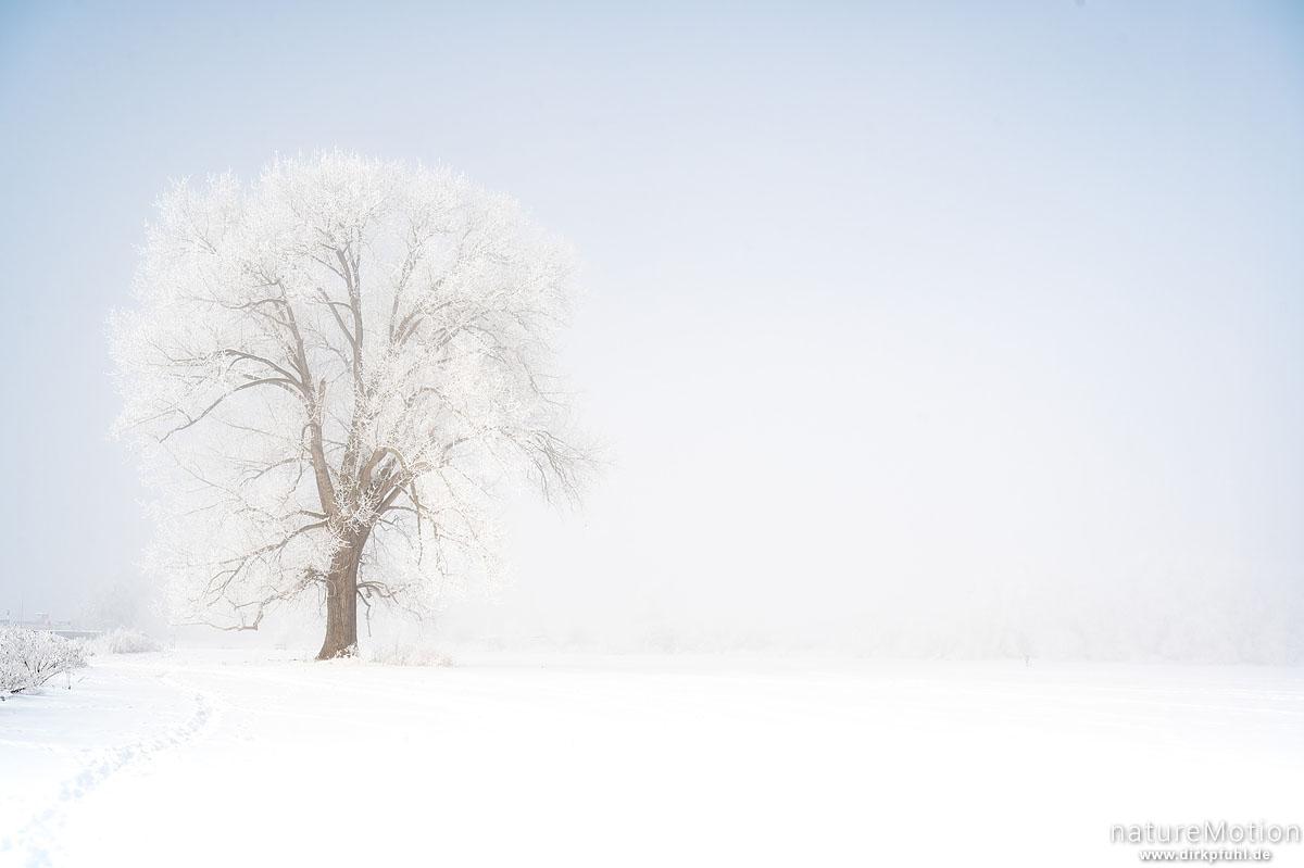 einzeln stehender Baum in weißer Winterlandschaft, Raureif, Flüthewehr, Göttingen, Deutschland