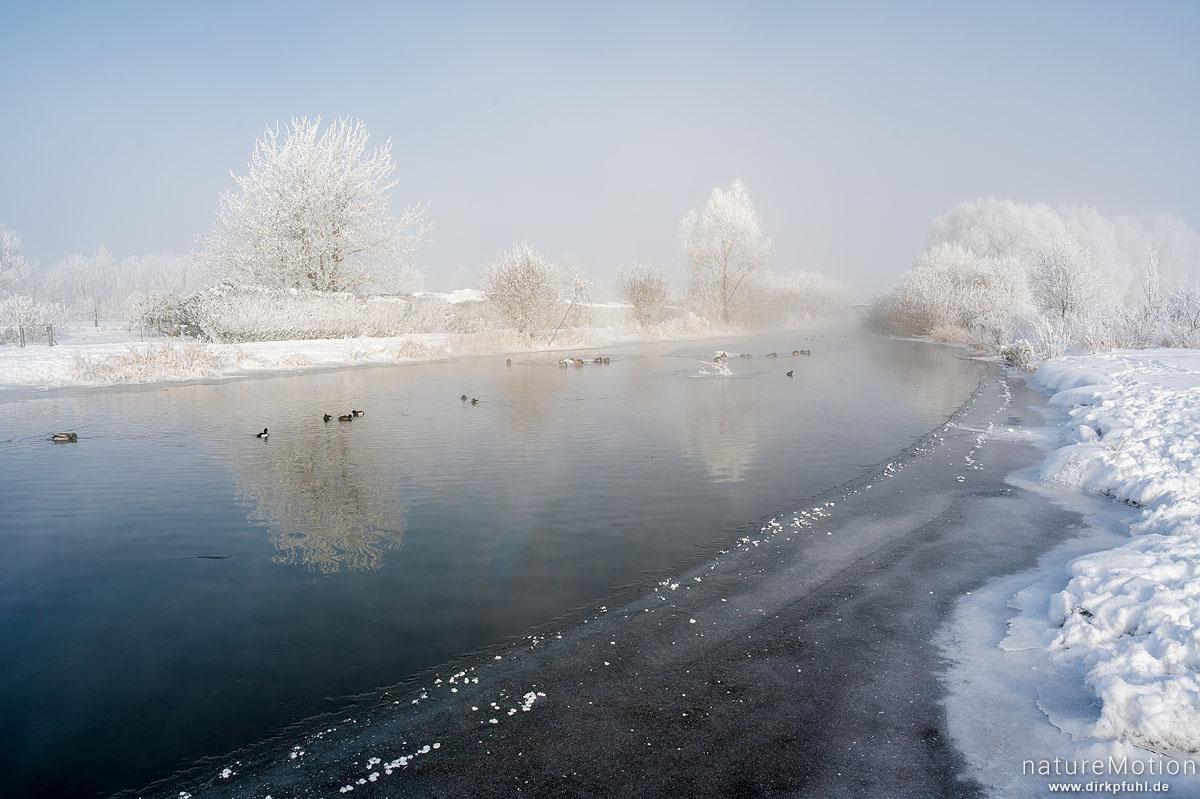 Fluss im Winter, vereiste Ufer und Ufervegetation, Raureif, Stockenten, Reiherenten, Flüthewehr, Göttingen, Deutschland