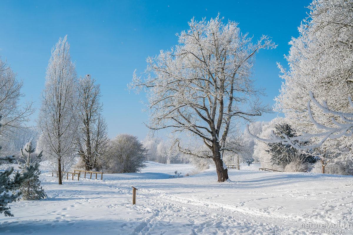 mit Raureif bedeckte Bäume, Kiessee, Göttingen, Deutschland