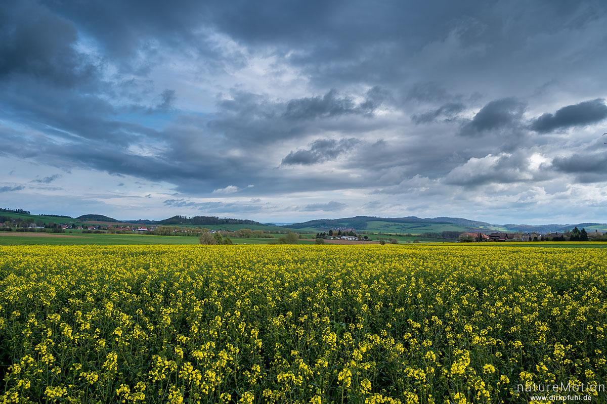 blühendes Rapsfeld, Regenwolken, Neu-Eichenberg, Deutschland