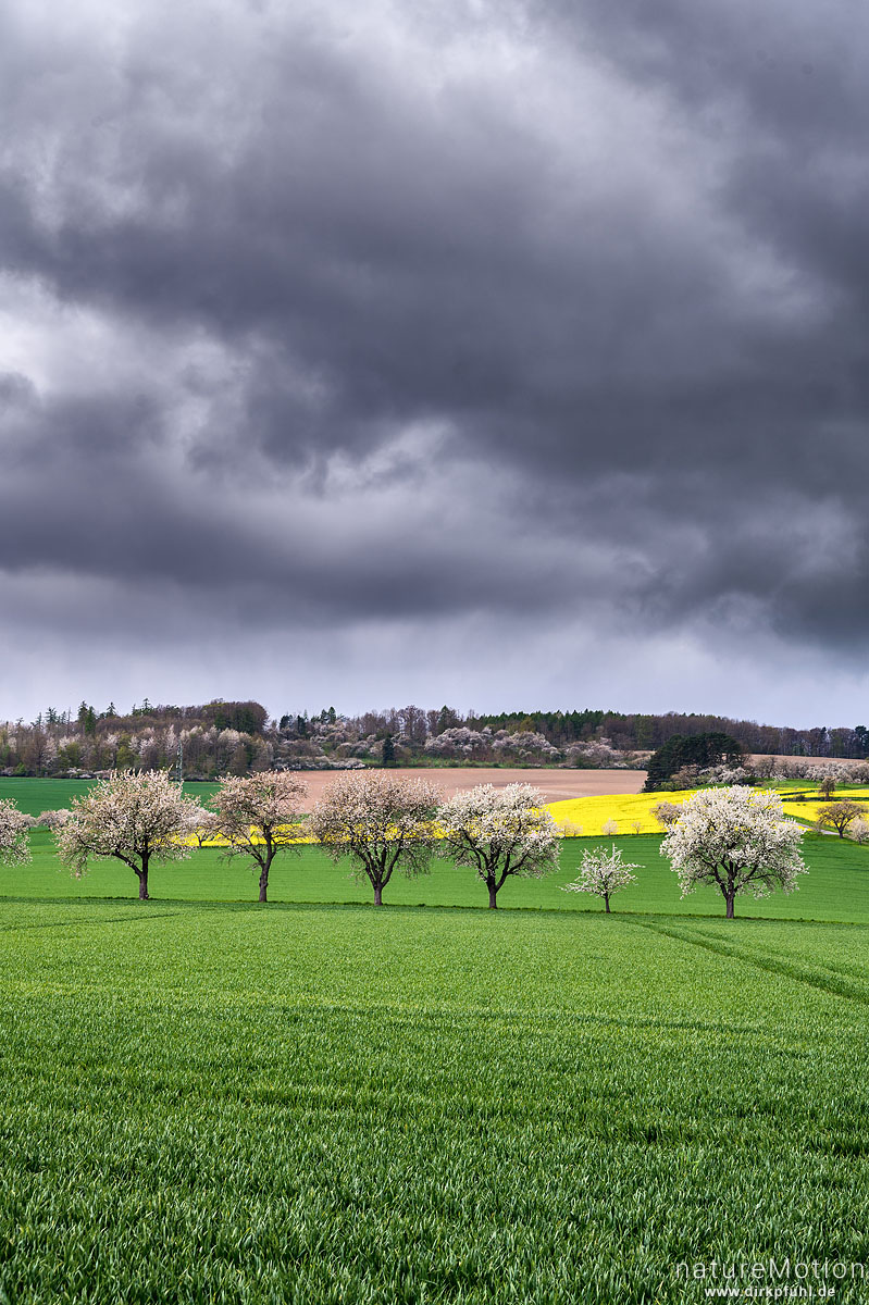 blühende Obstbäume, Rapsfelder, Getreidefelder, Regenwolken, Friedland, Deutschland