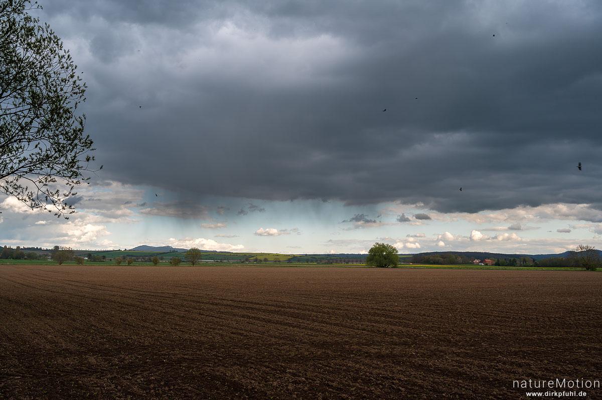 Regenwolken über Ackerfläche, kreisende Mehlschwalben, Gleichen, Reinshof, Göttingen, Deutschland
