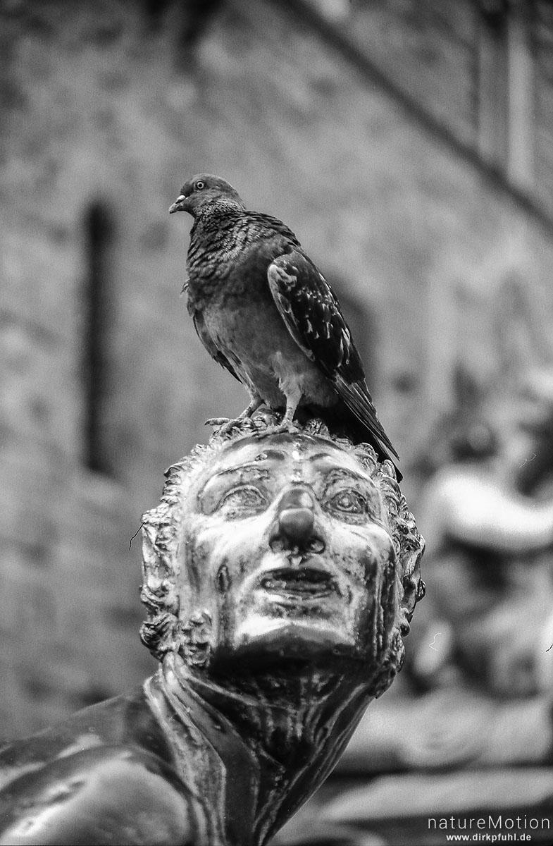 Taube auf Statue, Florenz, Italien
